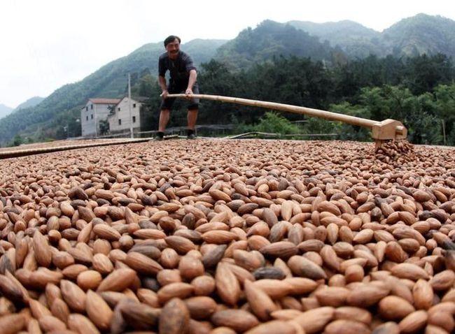 乡村振兴规划案例|浙江省诸暨市现代农业产业园